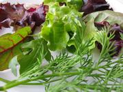 Линии производства салатов,  салатные линии,  салатовых смесей,  из зелен