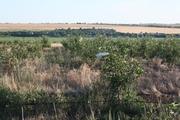 Продаю долю фруктового сада в Херсонской области