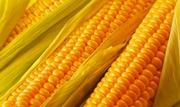 Семена Кукурузы продам