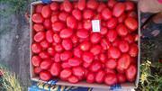 Гибридный помидор. Отличного качества