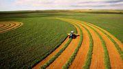 Закупаем дорого зерновые и масличные культуры