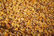 Куплю кукурузу,  сорго,  зерноотходы,  просроченный посевной ,  Херсон