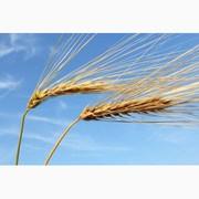 Куплю ячмень,  пшеницу,  горох,  рапс