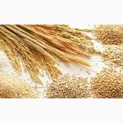 Куплю дорого пшеницу,  ячмень,  рапс,  горох